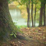 Prześliczny oraz {czysty zieleniec to nie lada wyzwanie, szczególnie jak jego pielęgnacją zajmujemy się sami.